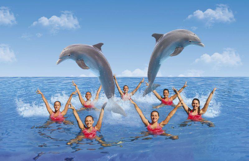 Mundomar estrena su nuevo espect culo de nataci n for Lo mas nuevo del espectaculo