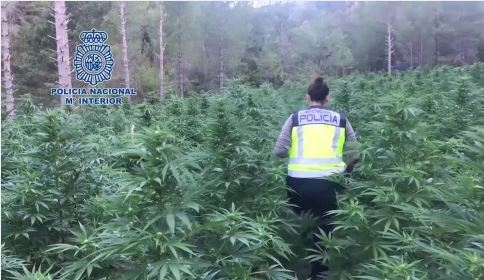 La mayor plantación de marihuana de Aragón
