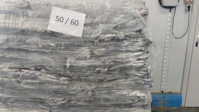 Decomisan nueve toneladas de boquerones en Punta Umbría,