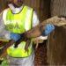 Intervienen por primera vez en Europa un ejemplar de Dragón de Komodo adquirido ilegalmente